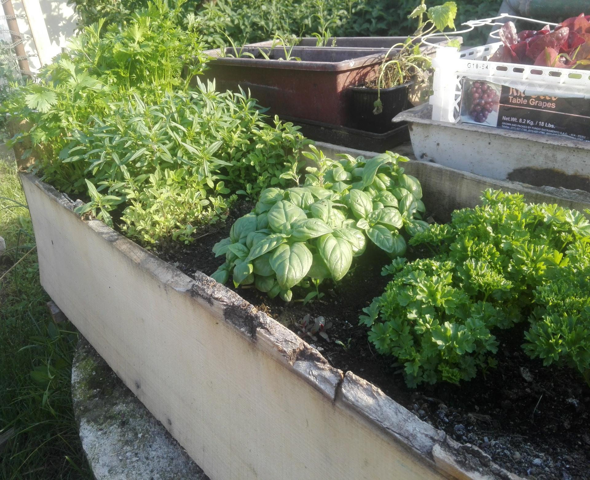 Moj rok v zahrade - Obrázok č. 19
