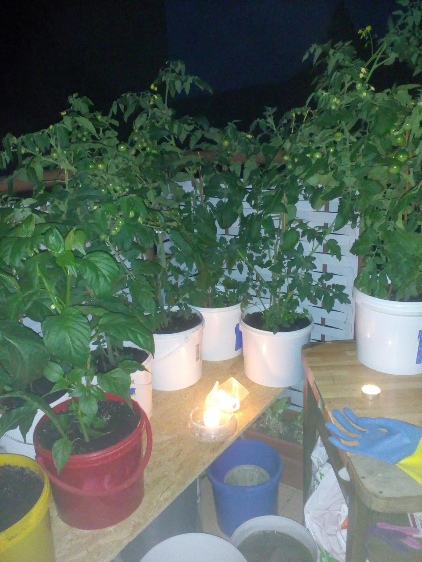 Záhradku mám už niekoľko... - Obrázok č. 2