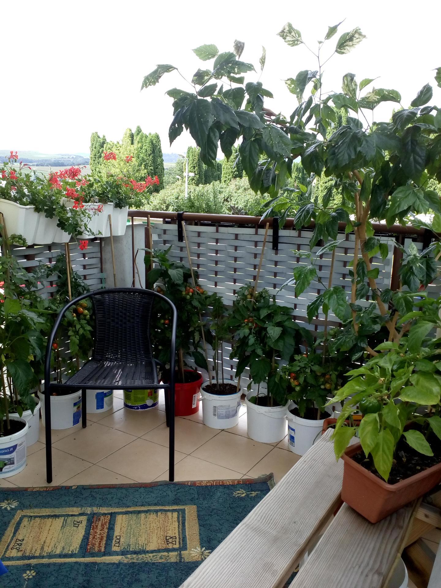 Záhradku mám už niekoľko... - Obrázok č. 3