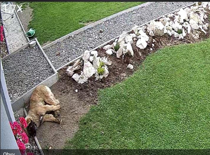 Stavba a destrukce mé skalky - pes zatím pouze hlídá, ve spánku :-D