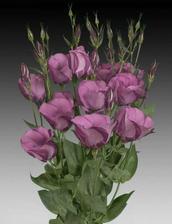 kytice-matky a svědkyně