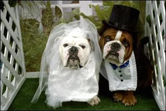 Pre štvornohých svadobčanov i deti - nakoniec nasi hlavni druzbovia vyzerali takto
