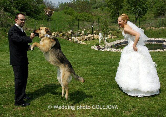 Pre štvornohých svadobčanov i deti - Obrázok č. 16