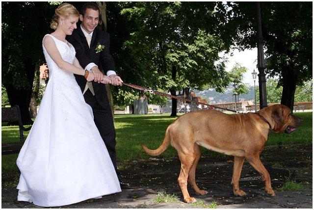 Pre štvornohých svadobčanov i deti - Obrázok č. 22