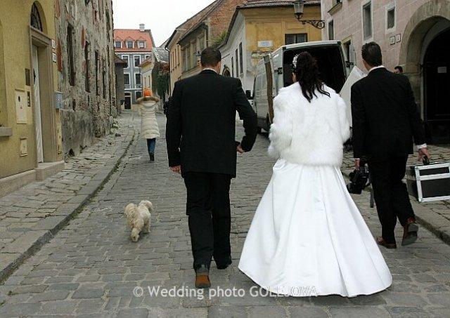Pre štvornohých svadobčanov i deti - Obrázok č. 25