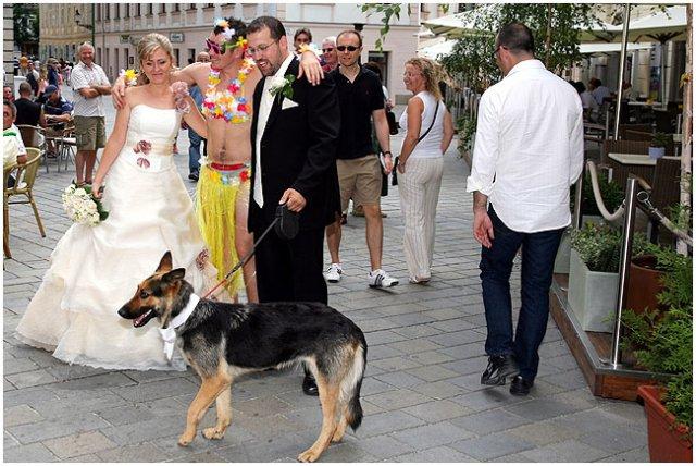 Pre štvornohých svadobčanov i deti - Obrázok č. 29