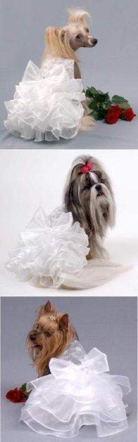 Pre štvornohých svadobčanov i deti - ako obliect 4-nohu druzicku