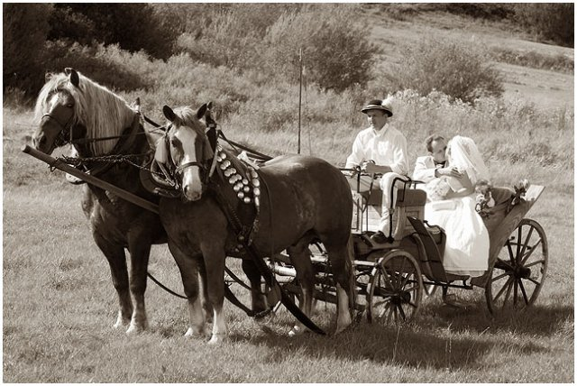 Nie sú kone ako kone... - Obrázok č. 2