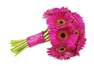 pokud nevyjdou tulipány, budou gerbery