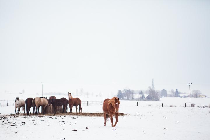 Zimní romance po našem - Obrázek č. 2