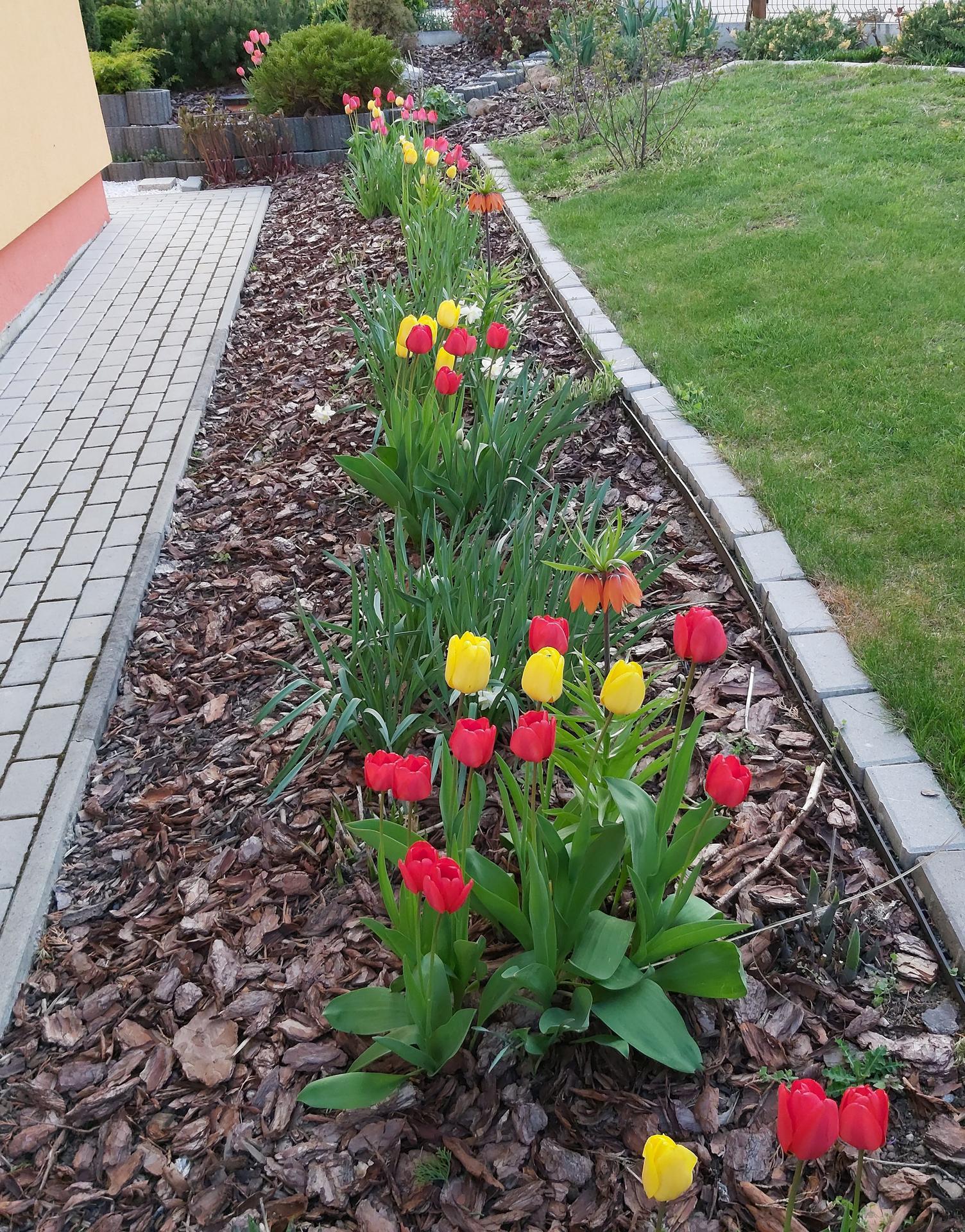 Rok na záhone s funkiami - apríl - máj