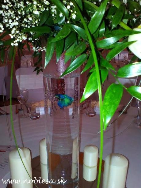 prenajom - váza valec - Obrázok č. 3