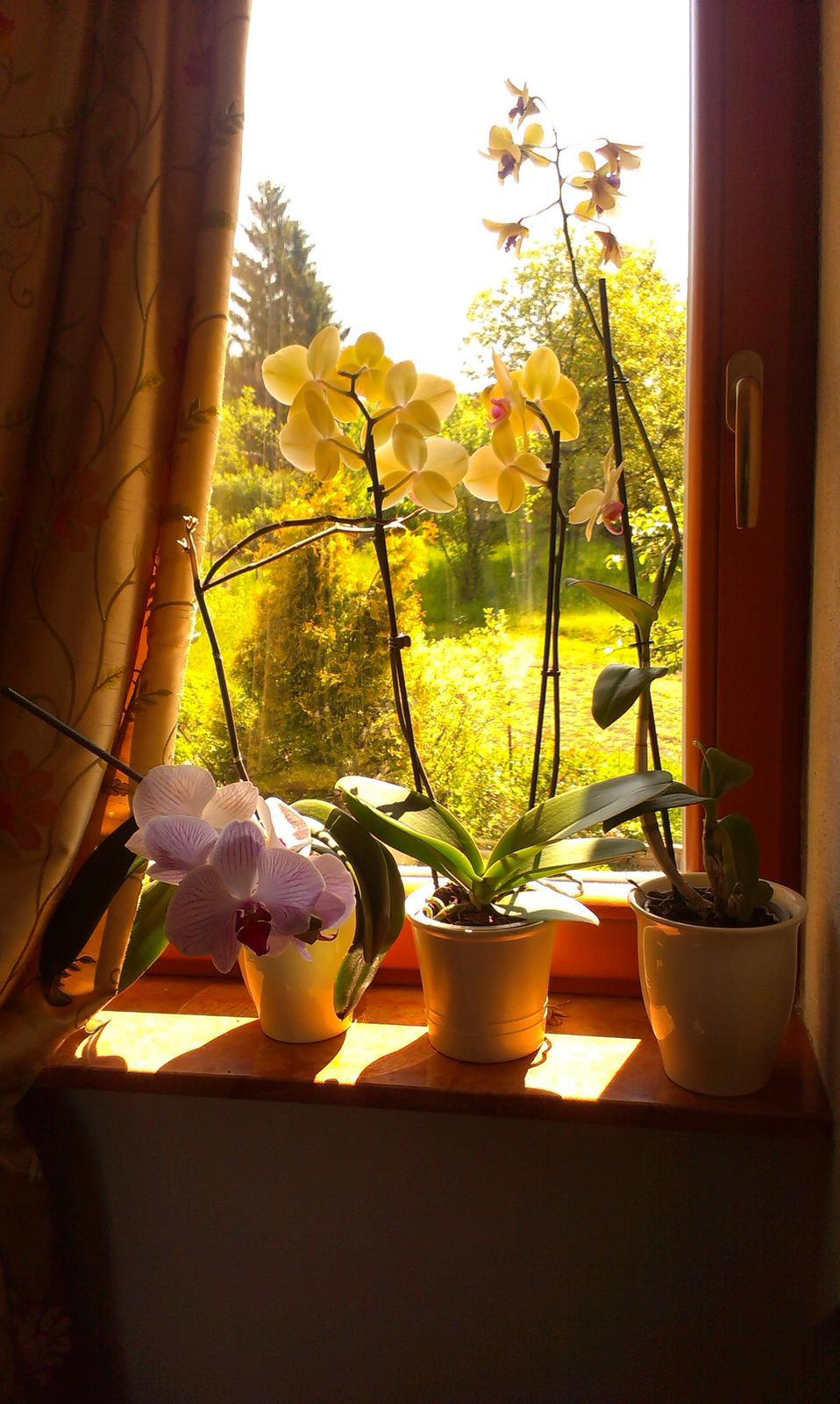 Orchidey môjho manžela - Obrázok č. 1
