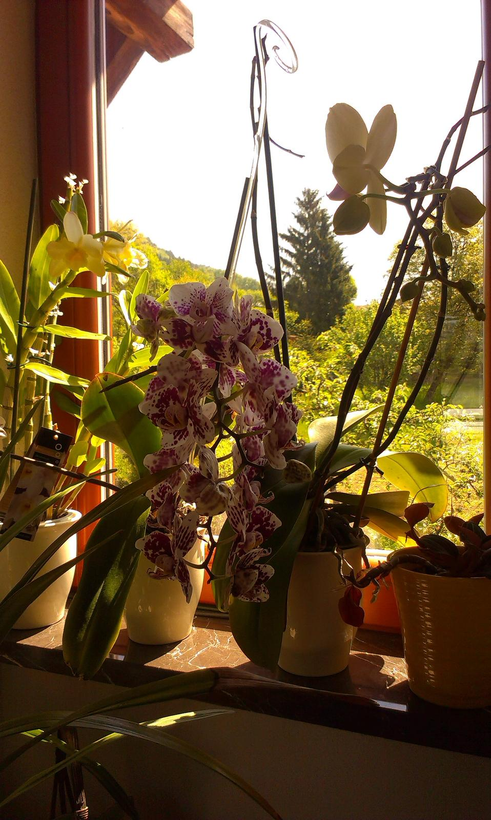 Orchidey môjho manžela - Obrázok č. 2