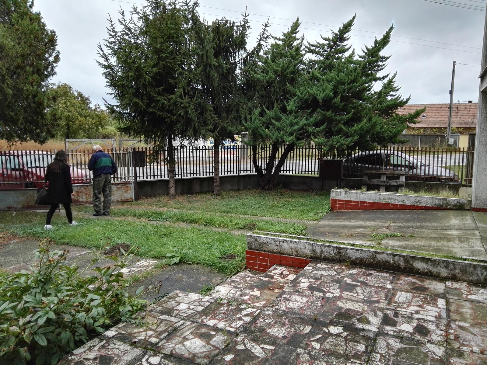 Rekonstrukcia RD - Stromy jak vedla ciganskej osady, (elektrikari zrezali vrch), budú musieť ísť preč. Ten napravo rastie tiež jak pod vplyvom.