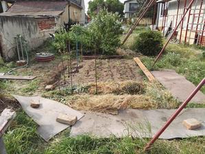 Zahradkarske prvotiny   #farmarhladazenu #bioekoraw #nelubimokopavat #stopburine #bezpracenenimrkva #internetypisalizetofunguje #pokusomyl