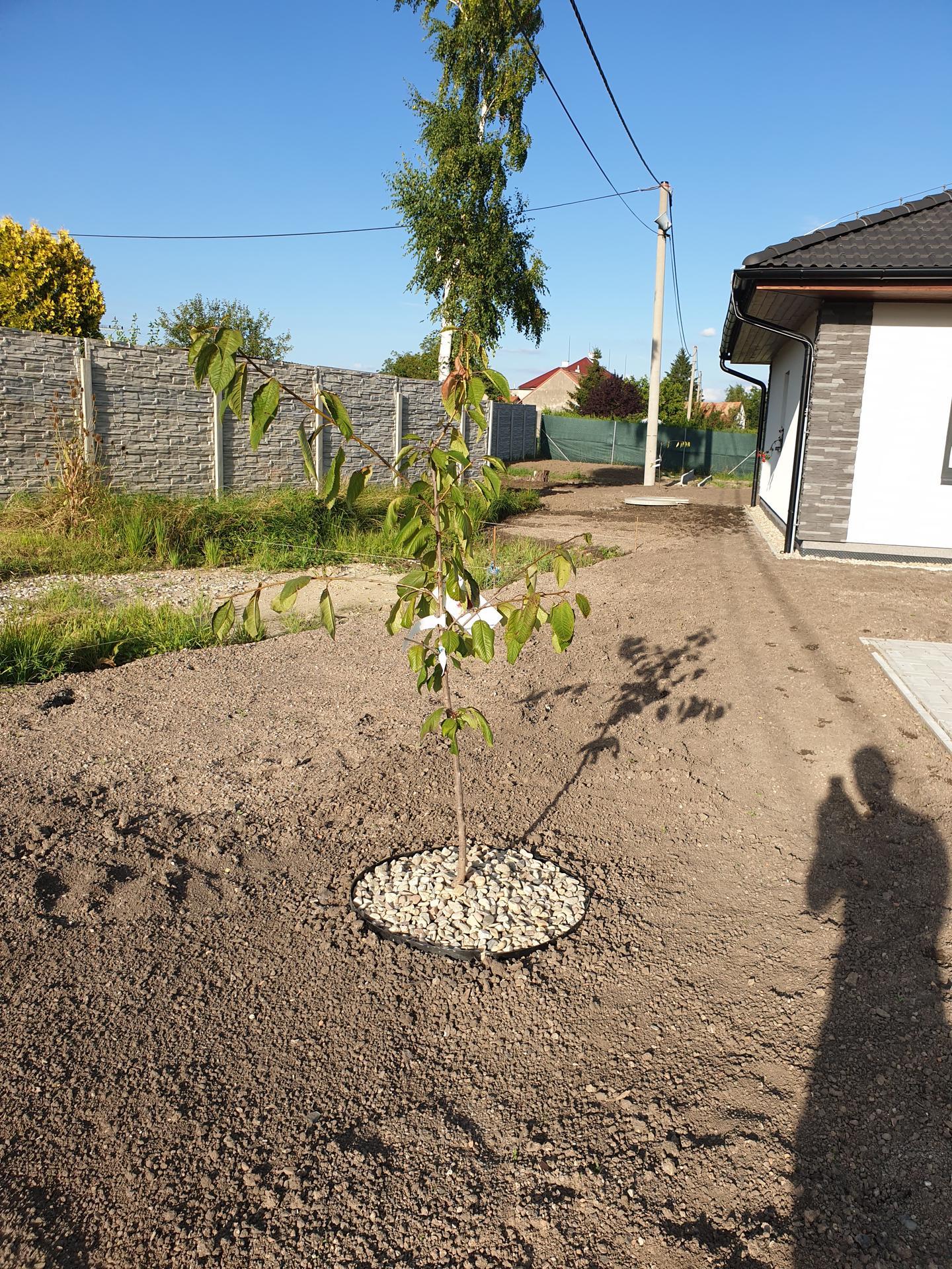 Zahrada a terasa - Obrázek č. 72